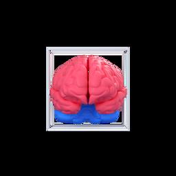 brain-mastermind-cerebrum-organ-intellectual_icon