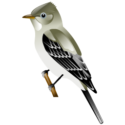 flycatcher_bird_icon