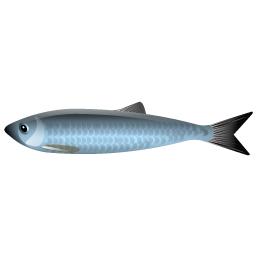 herring_fish_icon