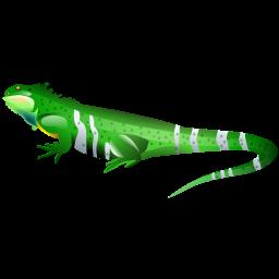 iguana_icon