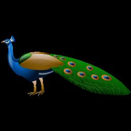 peacock_icon