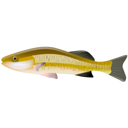 perches_fish_icon