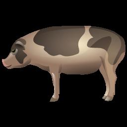 pig_icon