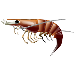 prawn_shrimp_icon