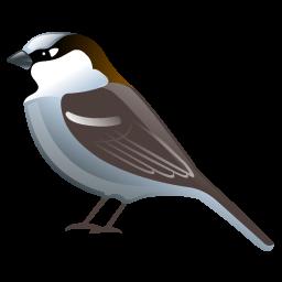 sparrow_icon