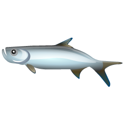 tarpon_fish_icon