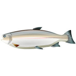trout_fish_icon