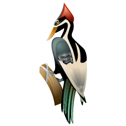 woodpecker_bird_icon
