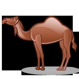 camel_icon