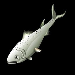 salmon_fish_icon