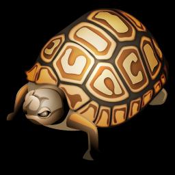 turtle_icon