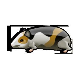 guinea_pig_icon