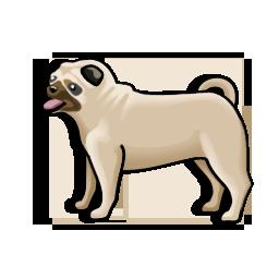 pug_icon