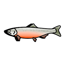 salmon_fish_icon