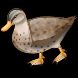 duck_icon