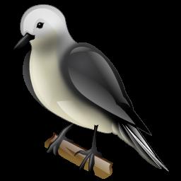 flycatcher_bird_icon