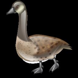 goose_icon