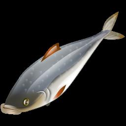 herring_fish_icon
