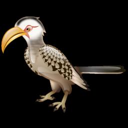 hornbill_bird_icon