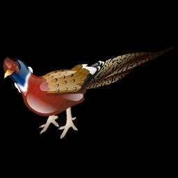 pheasant_icon