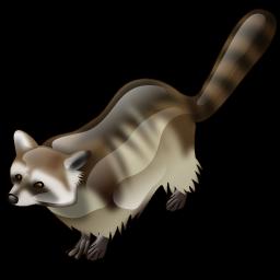 raccoon_icon