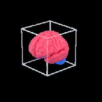 brain in box 3d icon small